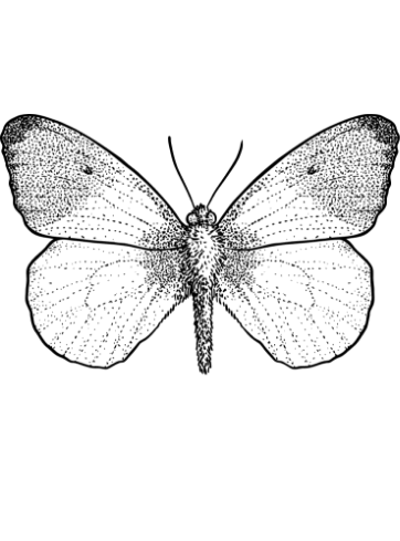 Anthocharis cardamines